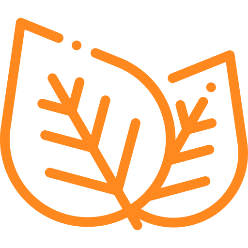 Folhas de arvore